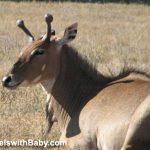 Exotic fauna await at Oregon's Wildlife Safari in Winston.