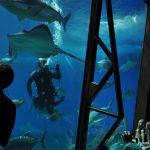diver at maui ocean center