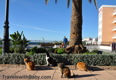 Cats on the Balcony of Europe at Nerja, Spain