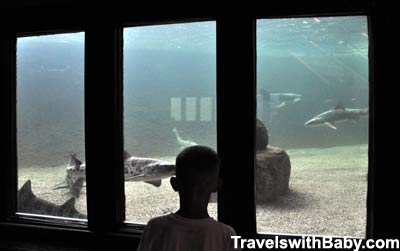 Viewing the sharks at Ocean World in Crescent City, northern California