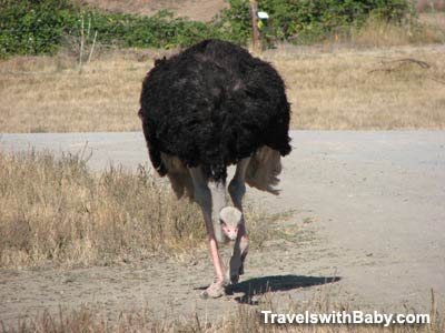 Where else can you play chicken with an ostrich en route to Portland, Oregon?