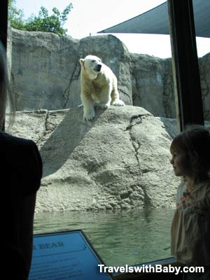 Child viewing a polar bear through glass at the Oregon Zoo in Portland