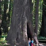 "Kids exploring a natural ""tree cave"" at Humbolt Redwoods State Park in California"