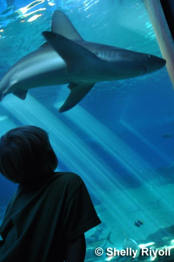 boy looking at shark