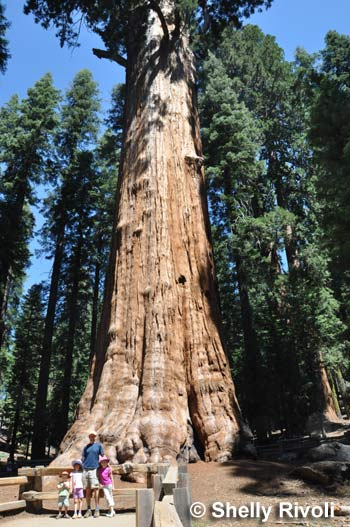 The 5 Best Places To Visit California S Giant Redwoods And