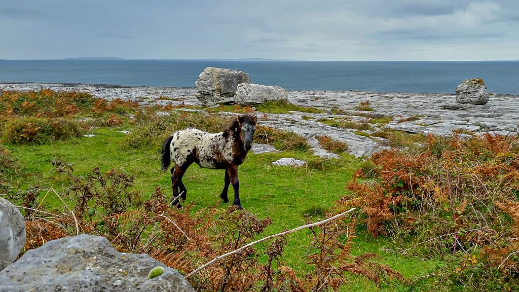 The 411 on County Clare with Kids