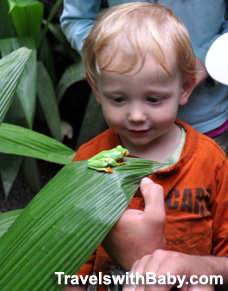 Toddler with red-eyed tree frog in Costa Rica